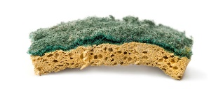dried out sponge